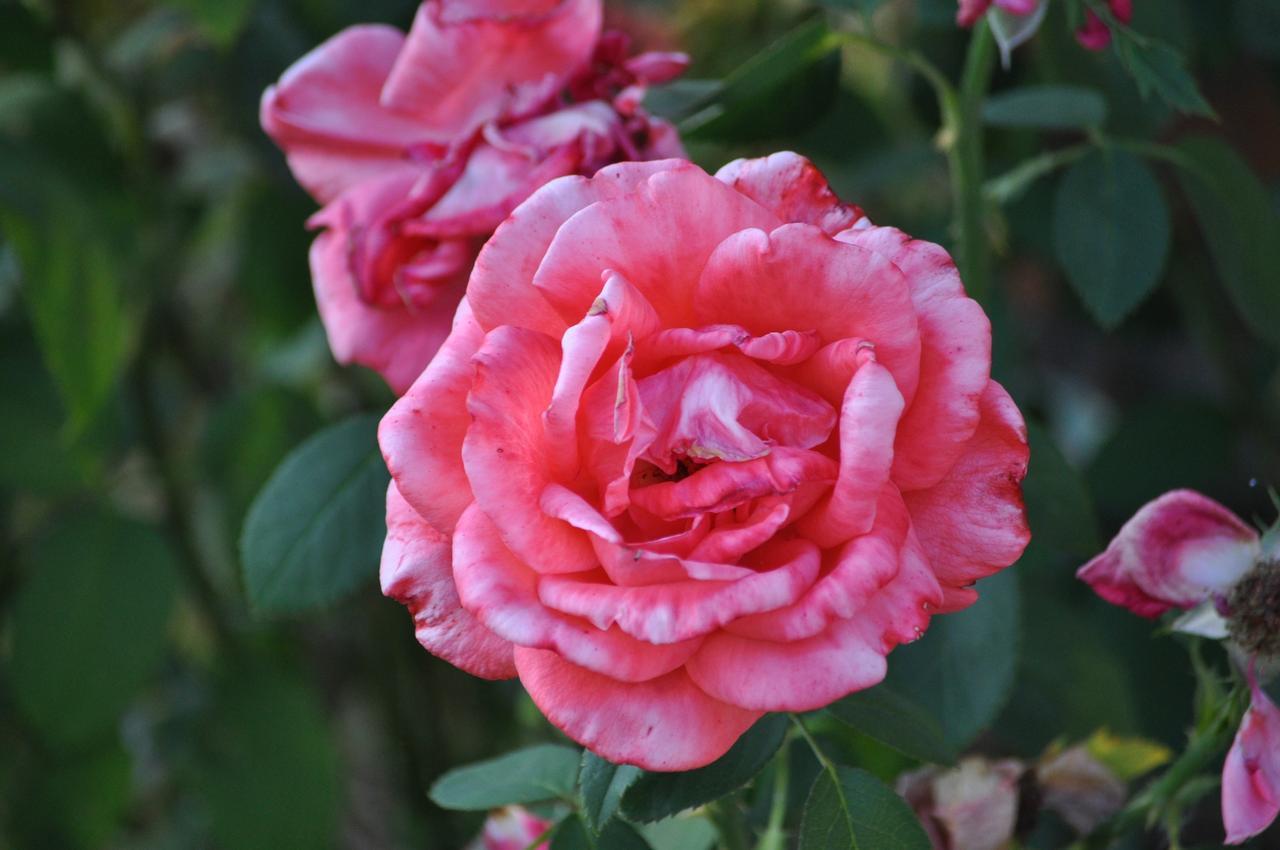 Flower-275