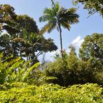 Martinique-Balata-garden-051