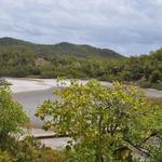 Martinique-Mangrove-001