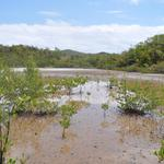 Martinique-Mangrove-003