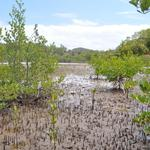Martinique-Mangrove-004